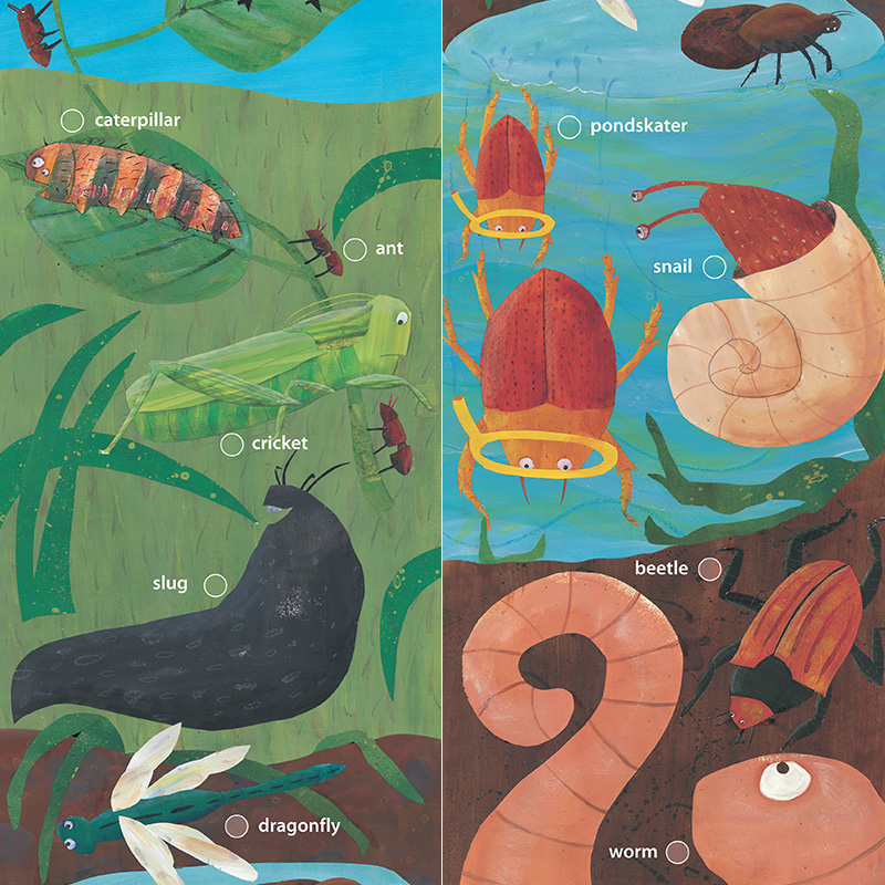 Bugs and butterflies, seaweed and stars – nature surveys for citizen scientists